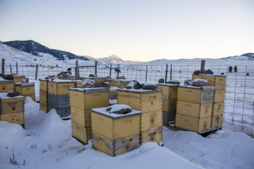 Emergency Winter Feeding: what to do if bees don't have enough food
