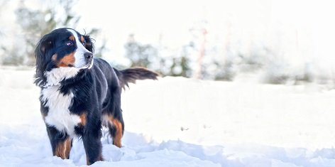 Murdoch's Top 10 Must-Haves for Dog Owners